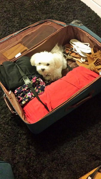 Getting ready for Germany. Guess who wants to go with us!
